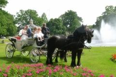 de_viervoeter_bruidskoets_met_friese_paarden