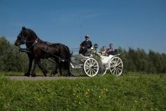 de_viervoeter_victoria_koets_met_friese_paarden