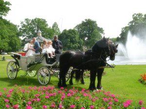 Bruidskoets met Friese paarden